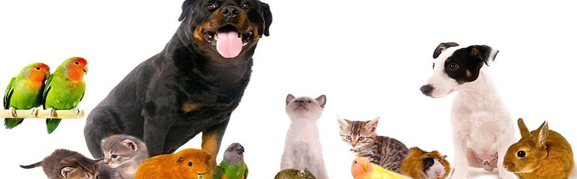 montage animaux