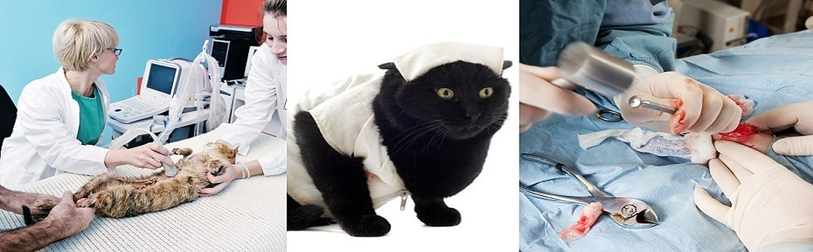 specialty-care-pinellas-veterinary-medical-association