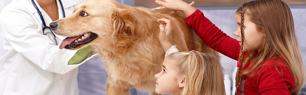 http://www.dreamstime.com/royalty-free-stock-images-little-sisters-dog-veterinary-surgeon-vet-examining-image31219319
